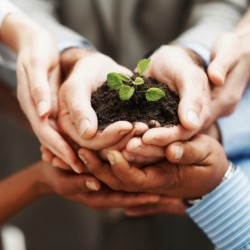 Business development - Hands holding seedling in a group